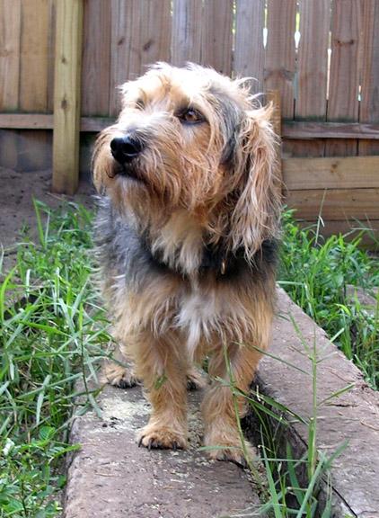 Rescue Dog Walter