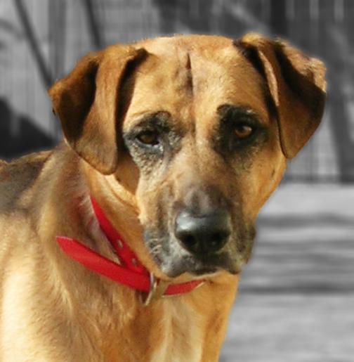 Rescue Dog Winnie